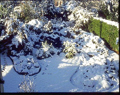 Digital Cinema - Filmmaker's Training Course?-garden-under-snow.jpg