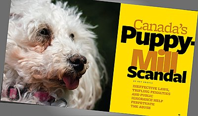 First crack at short documentary-puppy-mill-article.jpg