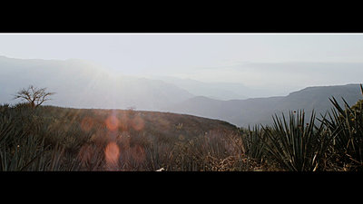 Landscapes?-tequila-rushes-master-00520.jpg