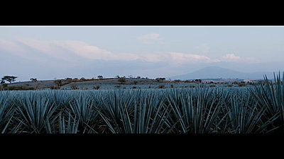 Landscapes?-tequila-rushes-master-00647.jpg