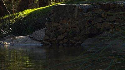 TV Nikon B4-Mount ENG lens.-roleypool-05.jpg
