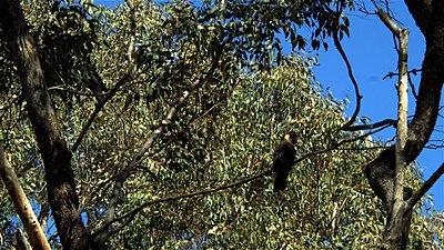 SI2K in Western Australia.-cockies-02.jpg