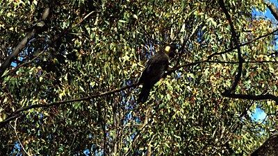 SI2K in Western Australia.-cockies-03.jpg