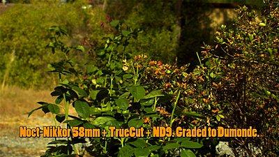 Schneider Optics Truecut on SI2K-brevis-test-upload-2-58-gr.jpg