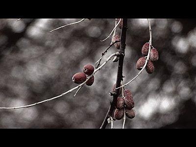 FX1 Simple Bleach Bypass-berry2.jpg