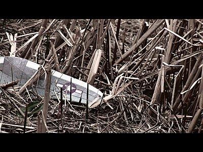 FX1 Simple Bleach Bypass-wing.jpg