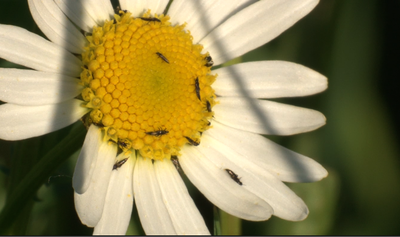 Would a Macro Extension Tube work?-picture-1.png