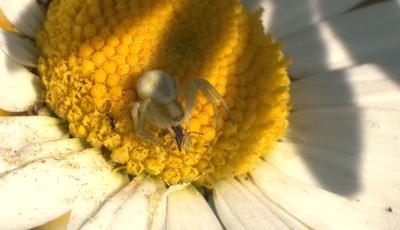 Would a Macro Extension Tube work?-picture-3.png