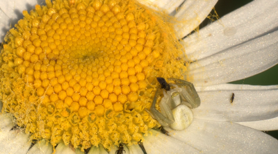 Would a Macro Extension Tube work?-picture-4.png