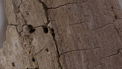 2x zoom on camera-stump1920.jpg