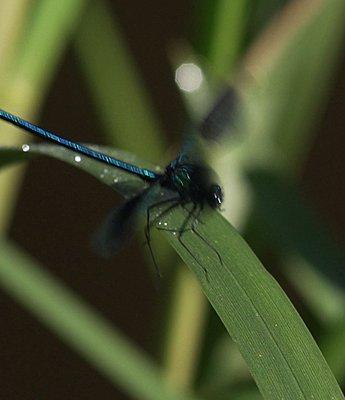 NanoFlash and slowmo-dragonfly-slomo-fs700.jpg