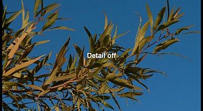 HD to SD Downconversion-dvd-test1.jpg