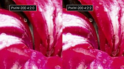 XQD vs SDHC comparison-420-422.jpg