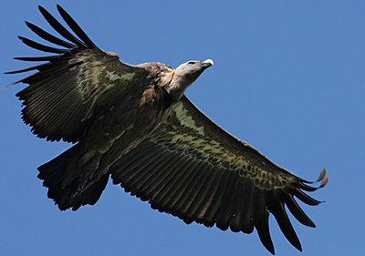 9 Foot Wing Span-img_2919.jpg