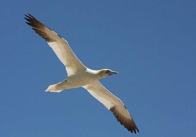 Fast lens for bird-flight-img_0719-copy.jpg
