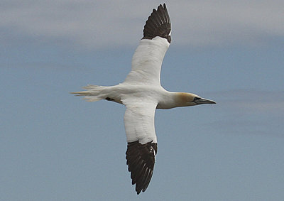 Fast lens for bird-flight-img_0064.jpg