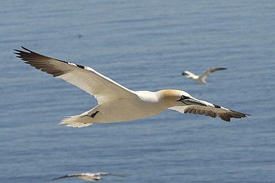 Fast lens for bird-flight-img_0486.jpg