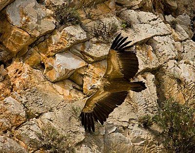 Fast lens for bird-flight-img_5163-copy.jpg