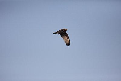 Fast lens for bird-flight-img_2782.jpg