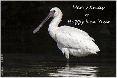 Merry Christmas!-merry-xmas.jpg