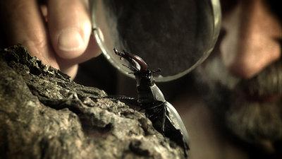 Hudson's Monarch -  Wildscreen 2010 Finalist (Screen Grabs)-hudson_with_beetle_17962.jpg