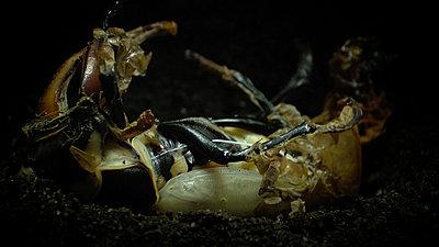 Hudson's Monarch -  Wildscreen 2010 Finalist (Screen Grabs)-pupal_breakout.jpg