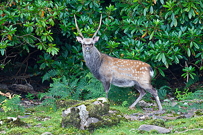 First impressions of RED One for wildlife shooting-stag-lough-leane-4.jpg