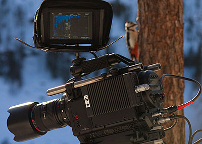 First impressions of RED One for wildlife shooting-pohjoisen-taivaan-alla-16.jpg