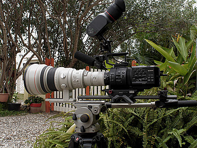 Sony FS700 for wildlife filmmaking : a subjective review-p1020084-copie.jpg