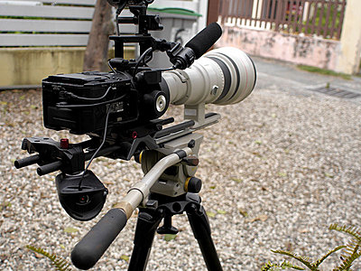 Sony FS700 for wildlife filmmaking : a subjective review-p1020093.jpg