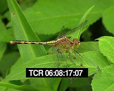 Extra resolution-dragonfly2.jpg