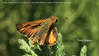 Some Macro Fun-fiery_skipper-2.jpg