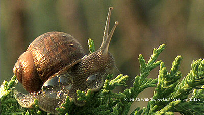 Some Macro Fun-garden_snail.jpg