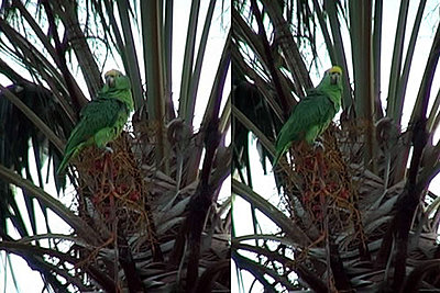 Attaching a Telescope to the DVC30-parrots.jpg