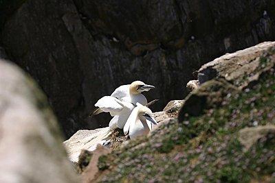 Birds-img_2238.jpg