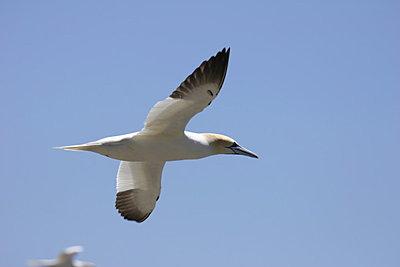 Birds-img_2174.jpg