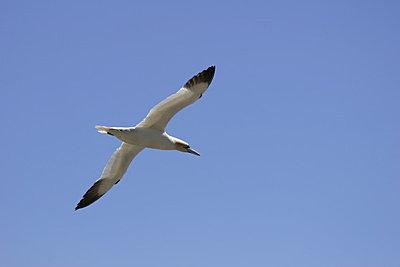 Birds-img_2256.jpg