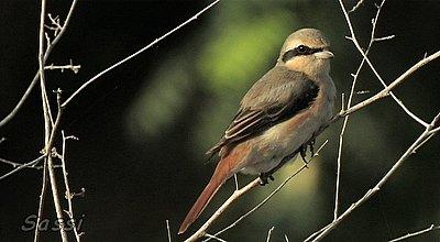 More bird clips-image3.jpg