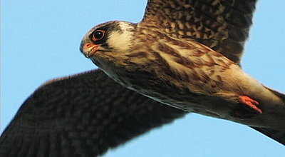 Flying Falcons-image21.jpg