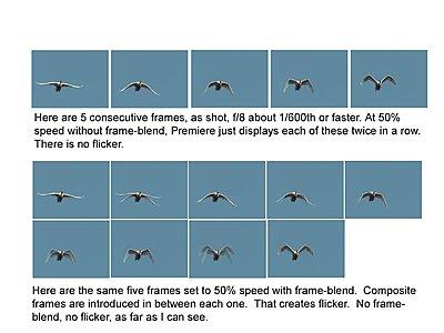 Siegel_Return of the White Birds_UWOLLongform-photoshop-composite-swan-frames-flattened.jpg
