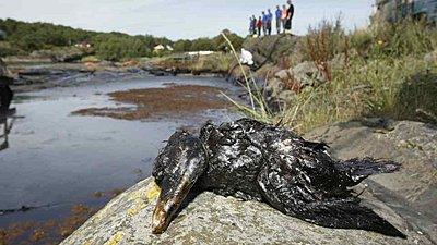 Disaster strike the southern coastline of Norway-seabird-1.jpg