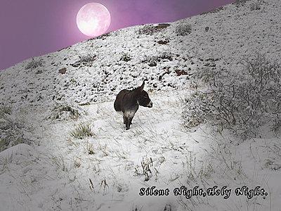 Season's Greetings from the Russells!-silentnightsm.jpg