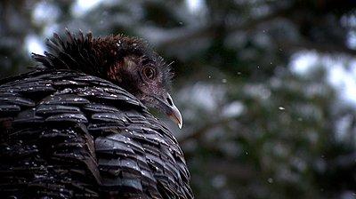UWOL36 Tales of wonders and woes-turkeyc.jpg