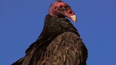 Tales of Wonder and Woe: UWOL #7-vulture2.jpg