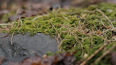 Tales of Wonder and Woe UWOL 15 1/2 DIY-moss1.jpg