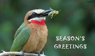 Season's Greetings Everyone!-christmas_bee-eater.jpg