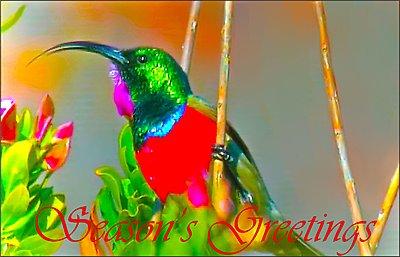 Tales of Wonders and woes - UWOL 32-sunbird_-greetings.jpg