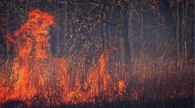 UWOL36 Tales of wonders and woes-burn162.jpg