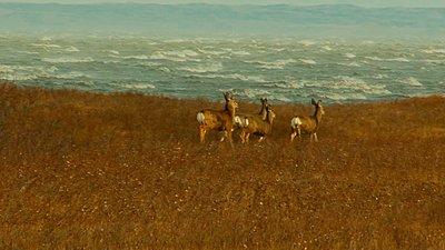 UWOL36 Tales of wonders and woes-deer.jpg