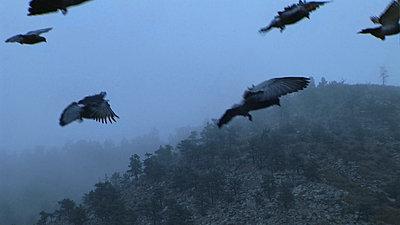 What is it? by Cat Russell - UWOL 36-birds.jpg
